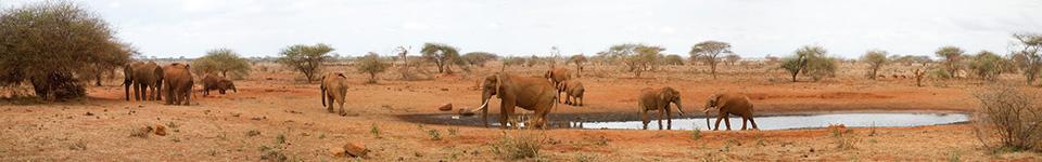 Ngutuni Lodge water hole, Tsavo East, Kenya